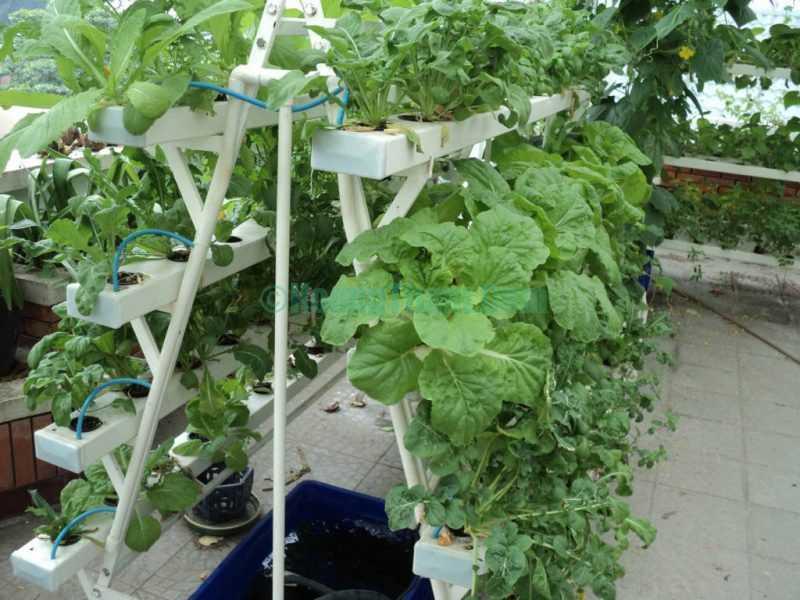 Cách trồng rau bằng phương pháp thủy canh hồi lưu