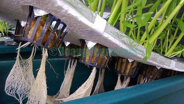 Cách trồng rau bằng phương pháp thủy canh 12
