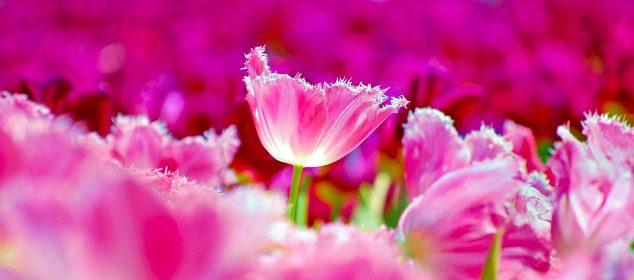 Hình nền máy tính với hình hoa đẹp nhất 25