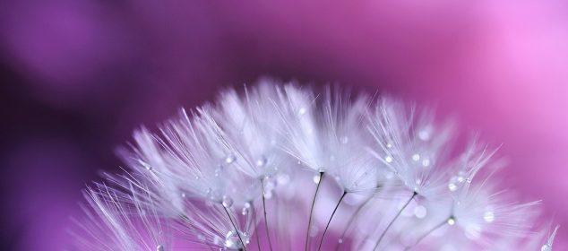 Hình nền máy tính với hình hoa đẹp nhất 22