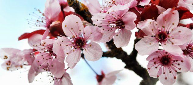 Hình nền máy tính với hình hoa đẹp nhất 19