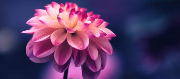 Hình nền máy tính với hình hoa đẹp nhất 18