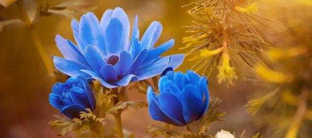 Hình nền máy tính với hình hoa đẹp nhất 17
