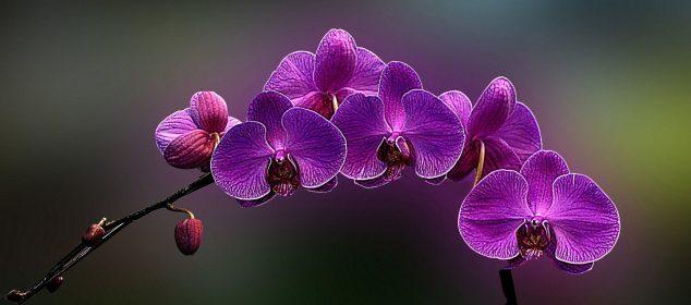 Hình nền máy tính với hình hoa đẹp nhất 13