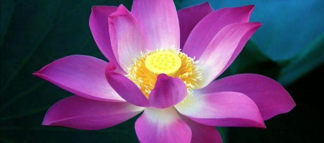 Hình nền máy tính với hình hoa đẹp nhất 11