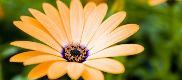 Hình nền máy tính với hình hoa đẹp nhất 6