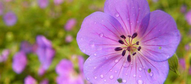 Hình nền máy tính với hình hoa đẹp nhất 4