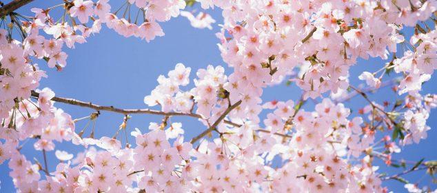 Hình nền máy tính với hình hoa đẹp nhất 1